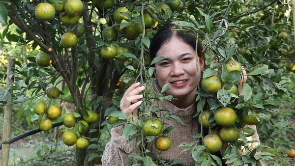 ชวนเที่ยวกินบุฟเฟต์ส้มเมืองเลยแท้ แค่คนละ 100 บาท สวนส้มตาอึ่ง